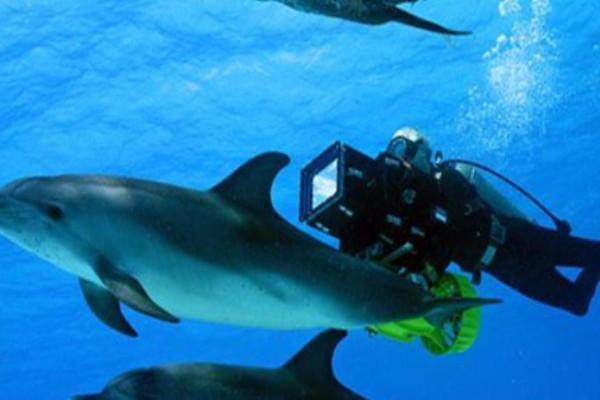 большое путешествие вглубь океанов 3d фильм 2009 скачать торрент