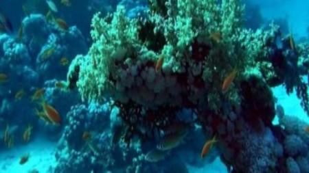 скачать фильм риф в 3d