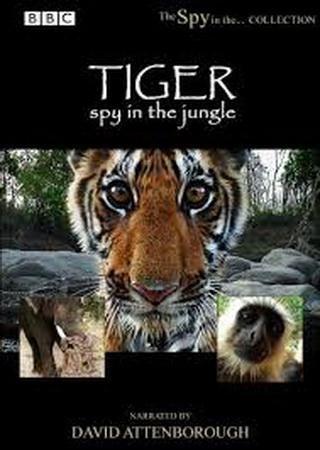 BBC: Тигр. Шпион джунглей