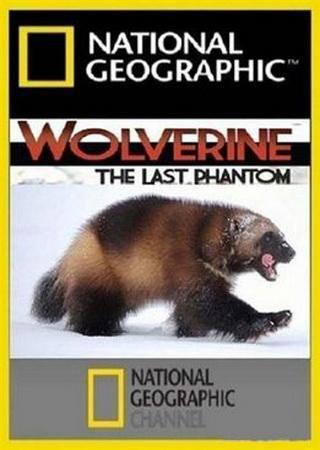 National Geographic: Неуловимая росомаха