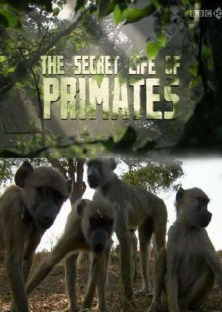 BBC: Тайная жизнь приматов