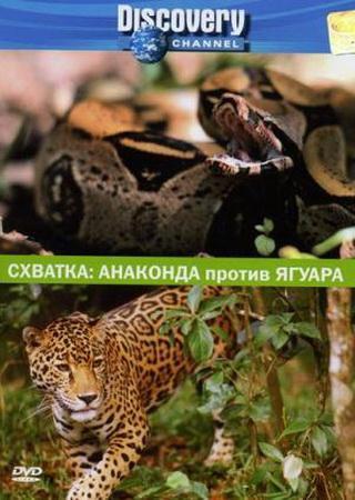 Discovery: Схватка. Анаконда против ягуара