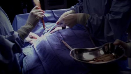 Анатомия страсти (10 сезон)